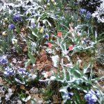 Snow's last HURRAH (April 21, 2021.