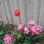 I admit it, I love flowers!  Nature is stronger than Covid